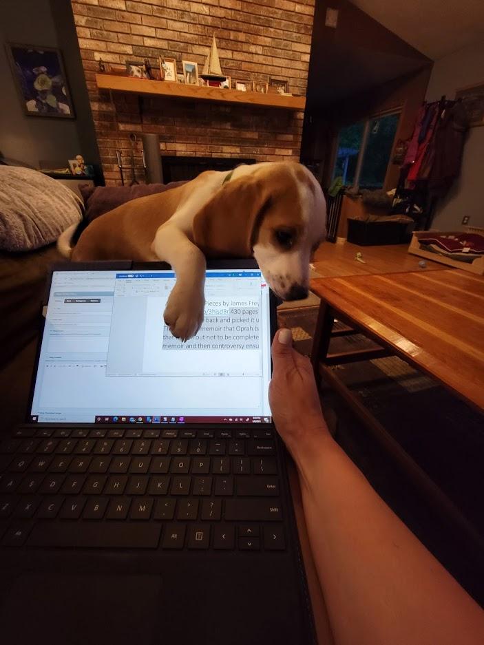 BJ Knapp author of Beside the Music as a new lemon beagle named Phin.