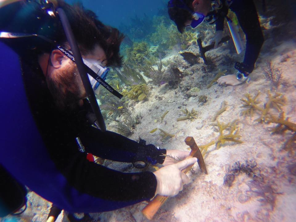 BJ Knapp author of Beside the Music volunteered at the Coral Restoration Foundation
